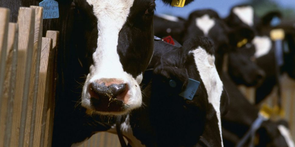 The Future Of Dairy Farming In...