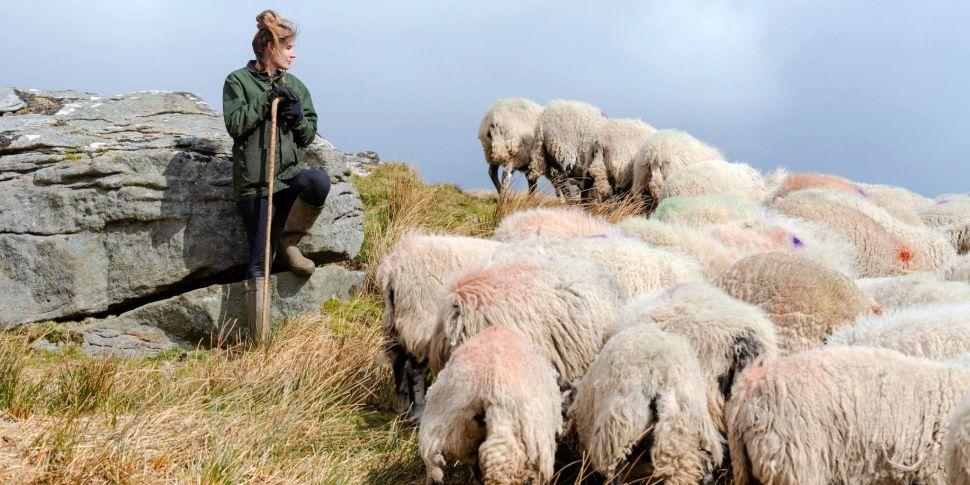 Farming: An ewe that refuses t...