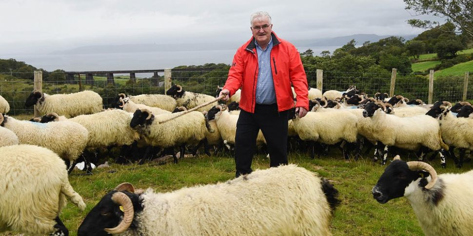 A Kerry man to walk his sheep...