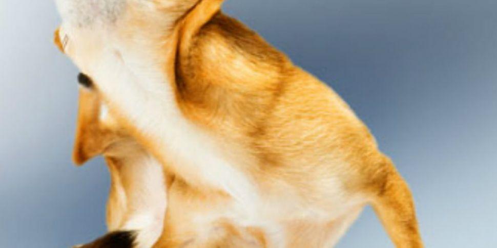 Pet skin problems