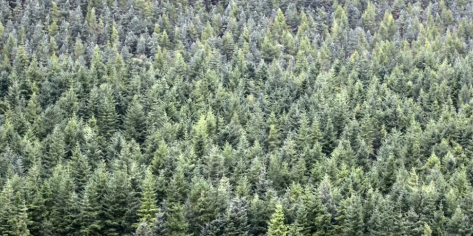 Coillte to open more forests t...