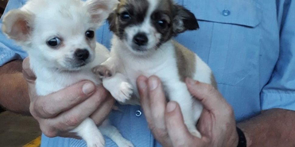 Puppies seized by Revenue at D...