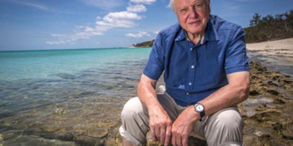 David Attenborough docs are mi...