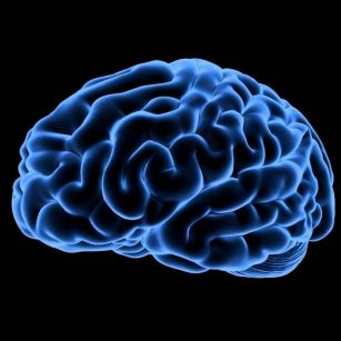 Are male brains from Mars and...