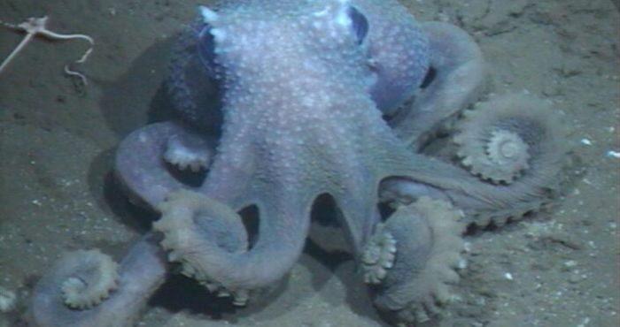 Irish co-authored study reveals the mystery behind octopus skin