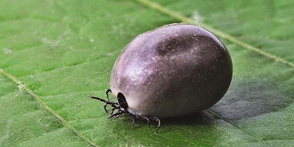 Report on Lyme Disease and how...