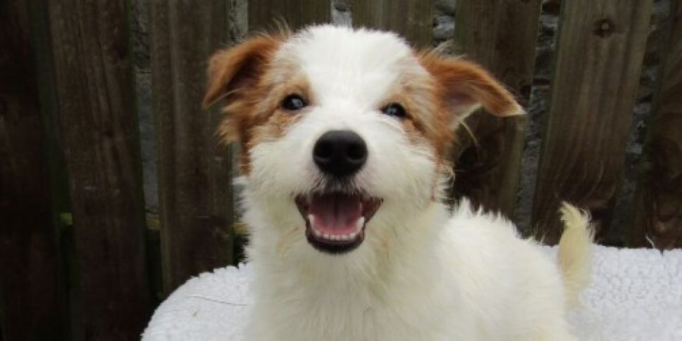 ISPCA appeals for new homes fo...