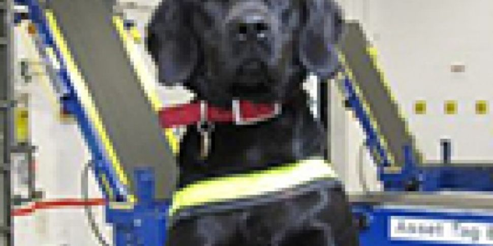 Sniffer dog Stella bags €160,0...