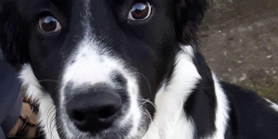 Surge in requests to rehome do...
