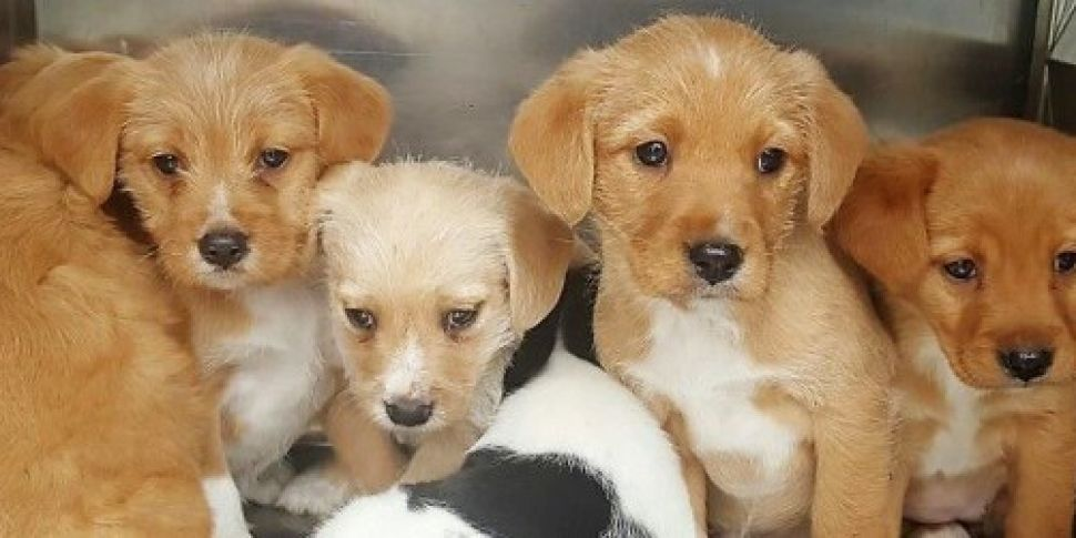 DSPCA appeals for people to fo...