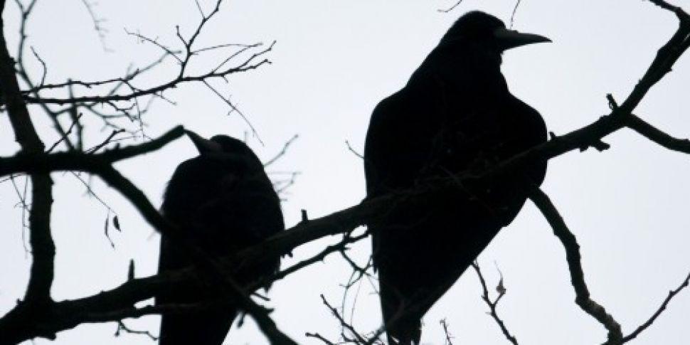 Bird flu case confirmed in wil...