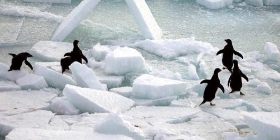 Scientists discover penguin &#...