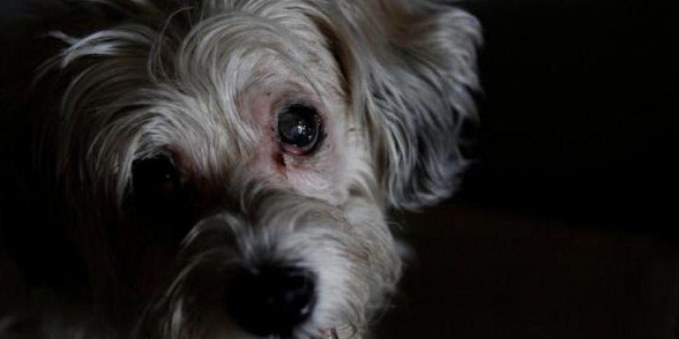Loyal dog guards owner's d...