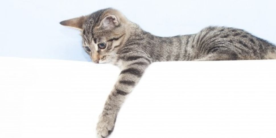 Female cats more likely to be...