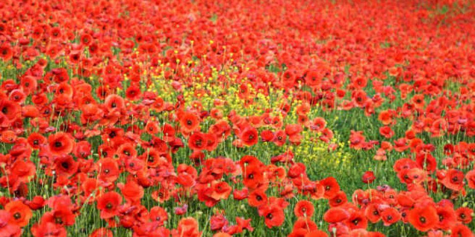 Should we wear the poppy? | Newstalk