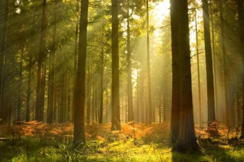 Monaghan County Council in negotiations to be compensated for trees cut down on its land