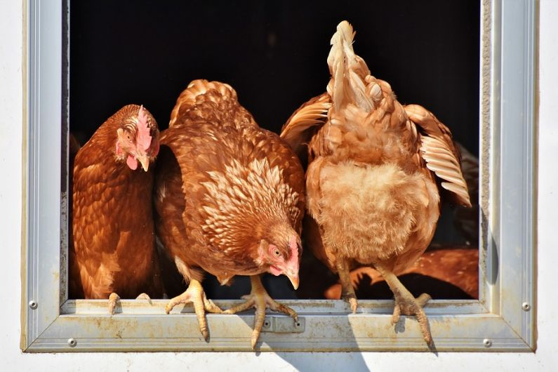 Minister says foreign markets key to protecting local poultry sector