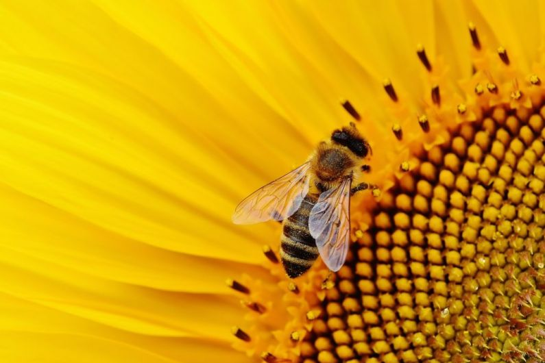 HEAR MORE: Beekeeper Seamus Murphy speaks about local beekeeping association