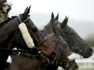 Four new cases of equine flu d...