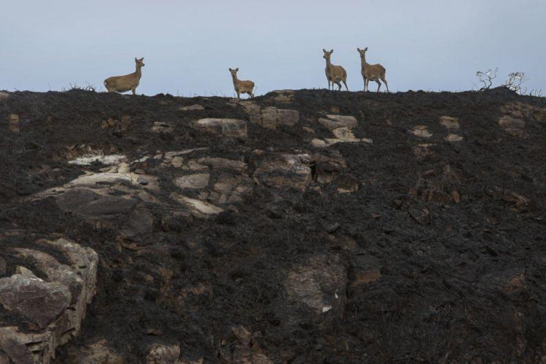 Study on impact on biodiversity after Killarney National park fires
