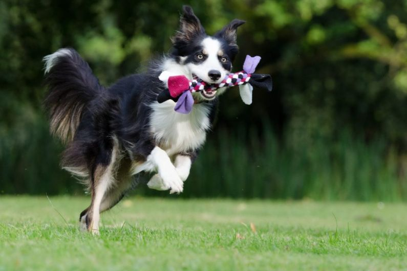 Kerry County Council to review proposal for dog park in Listowel