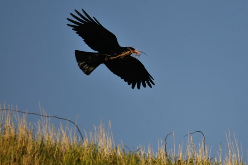 People of Kerry urged to report sightings of rare bird to help conservation