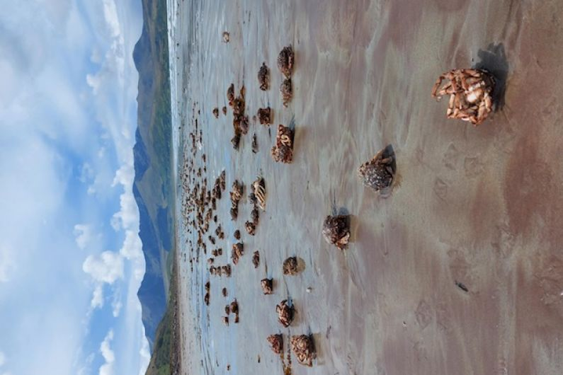 Sight of thousands of dead spider crabs on Kilcummin Strand described as shocking and flabbergasting