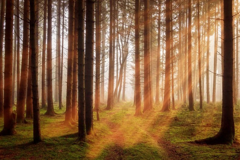 Kerry sees decline in forestry planting