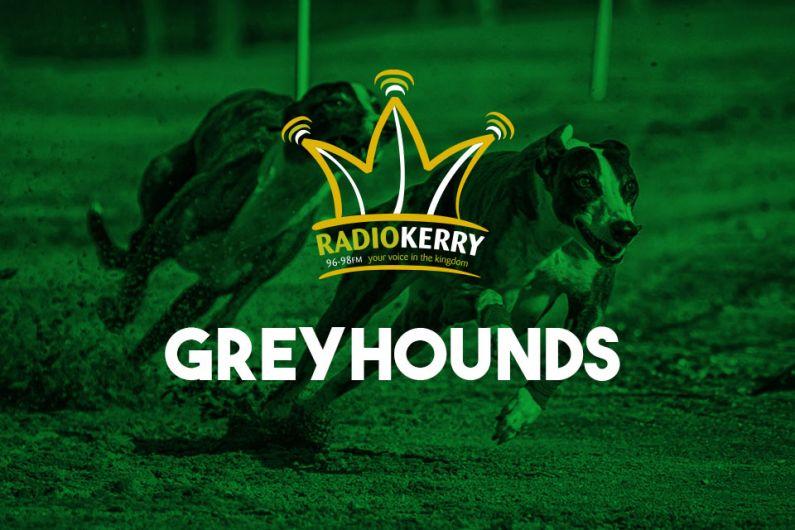 Tuesday Night Greyhound Results