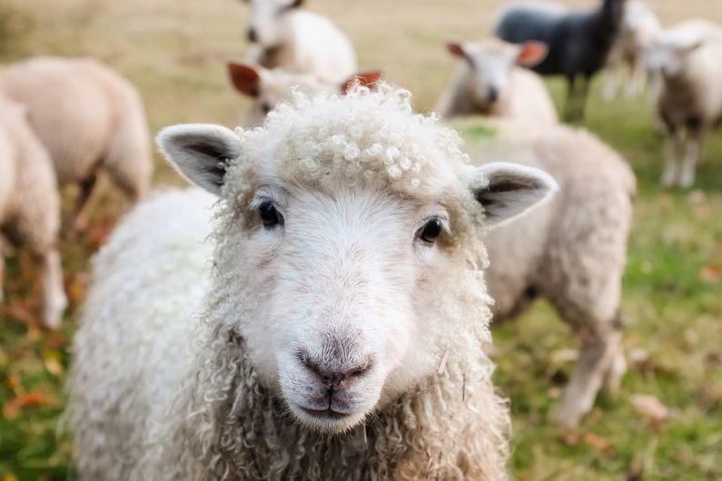 Dog owners reminded of ban on walking pets on farmland as peak lambing season begins
