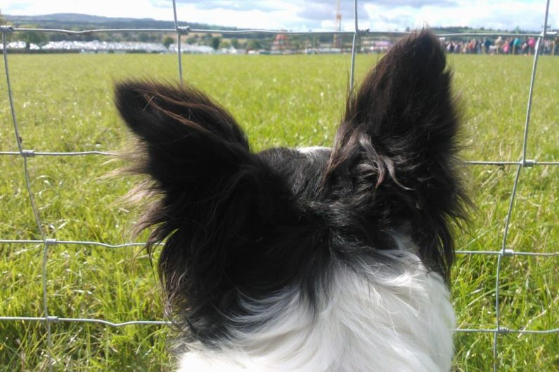 Killorglin Gardaí urging vigilance following attempted theft of dogs