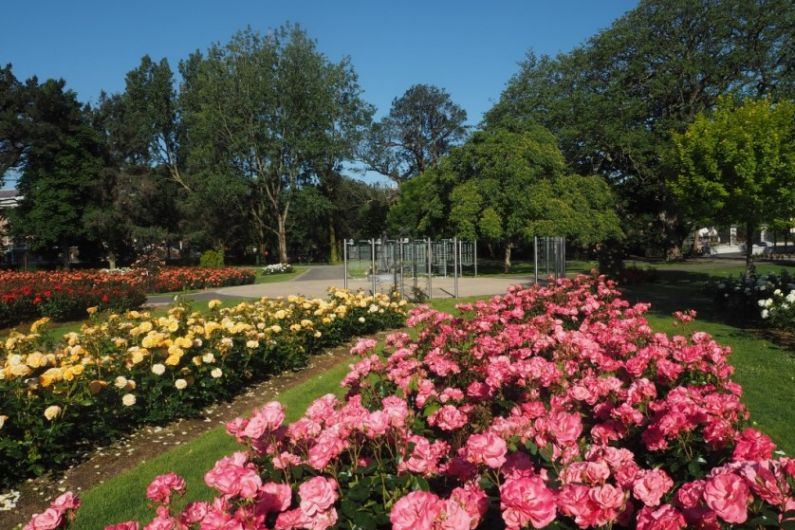 Town Park survey highlights concerns about safety