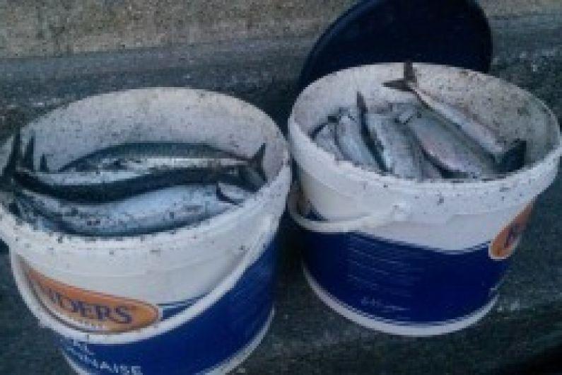 Kerry and Cork fishermen help feed zoo animals