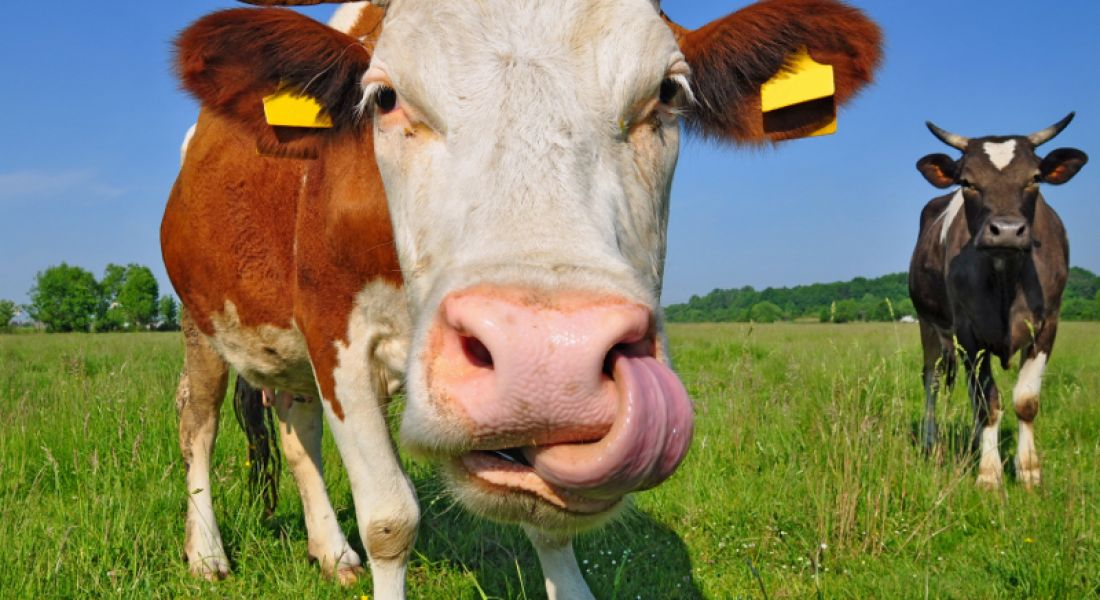How many cows are in Canada? And other strange interview questions (video)