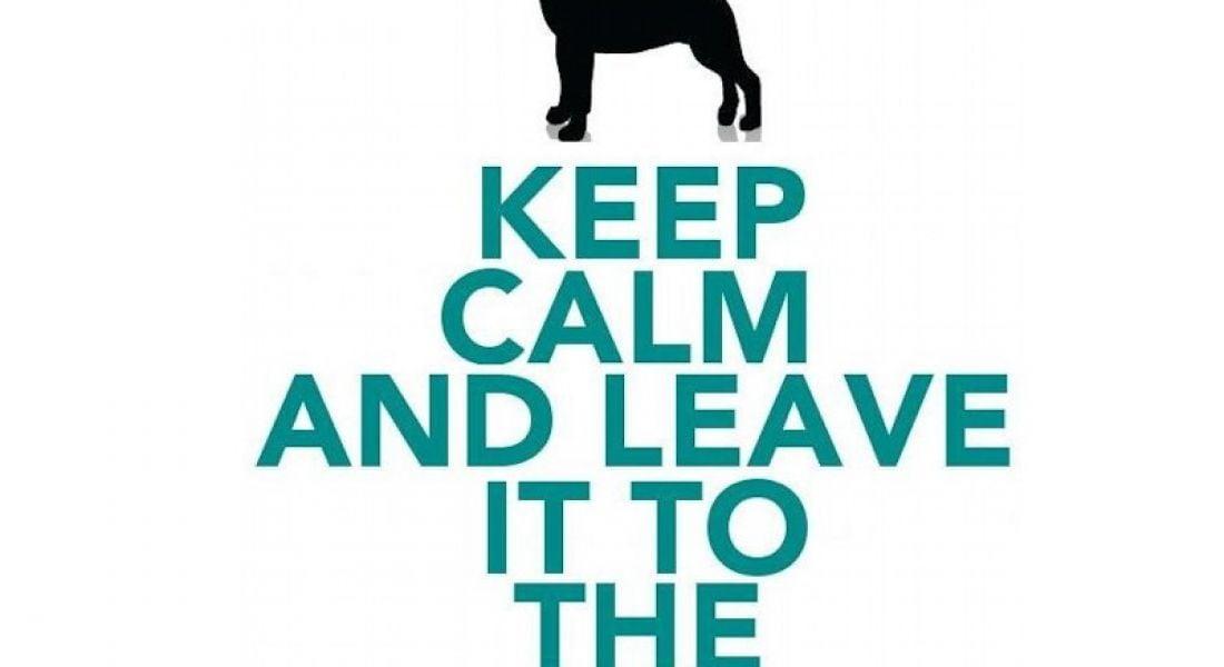 Career memes of the week: veterinarian
