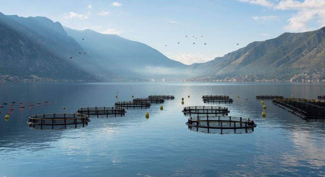 Farm fishing and Ireland's blue economy