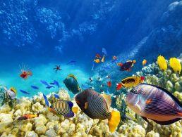 Zalando and Twitter to sponsor Career Zoo 10