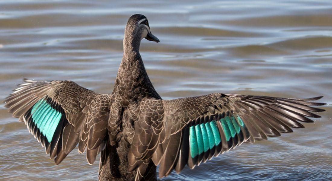 Black Duck lays 58 new jobs in Belfast