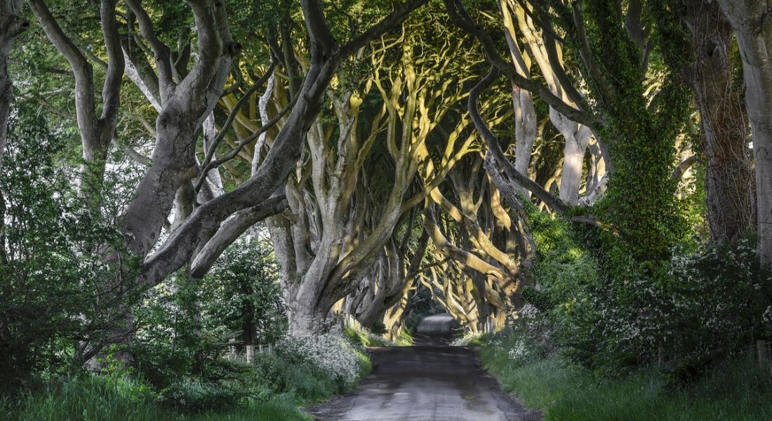 The Dark Hedges, Ulster