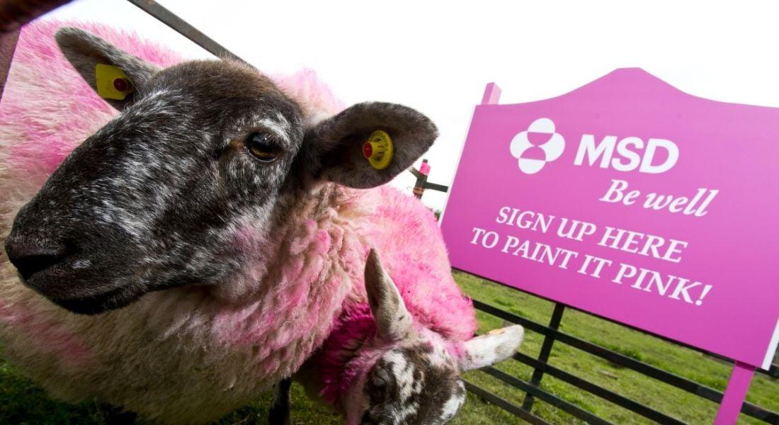 MSD CSR initiative for Irish Cancer Society