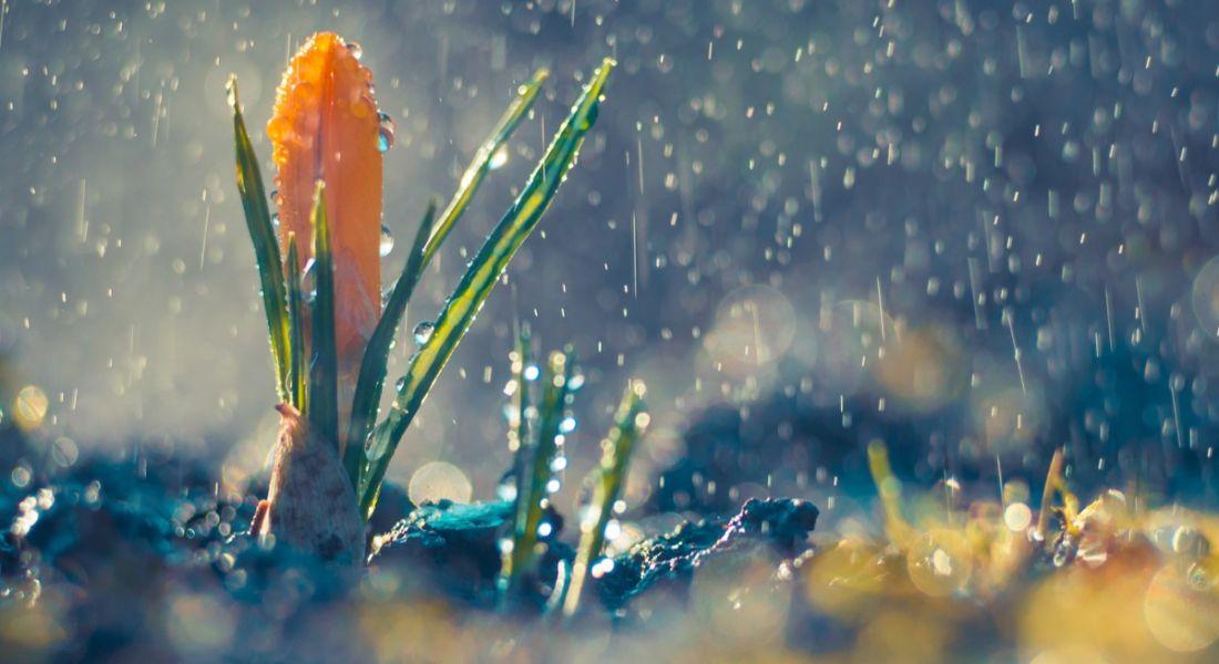 Rain falling on orange crocus 0- April jobs shower bring May flowers