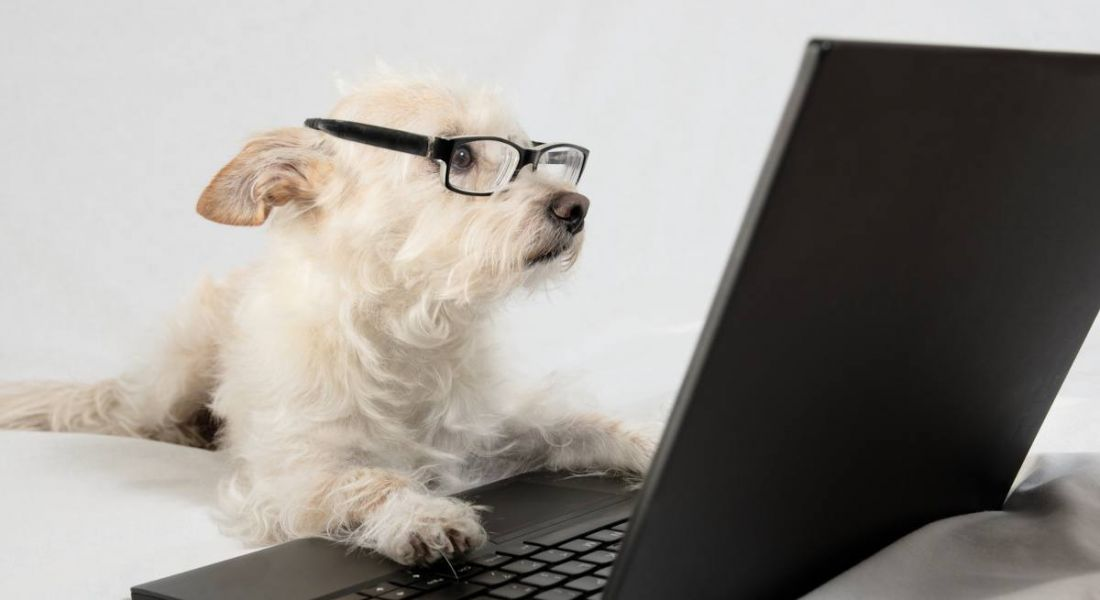 Old dog, new tricks: Why your tech skillset needs to change