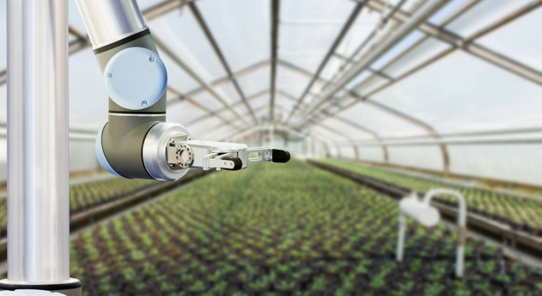 Photo of a machine working in a greenhouse, above rows of crops.