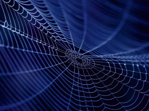 Despite being dead 110m years, spider fossils' eyes still glow in the dark