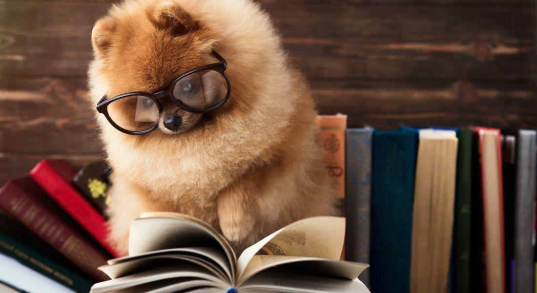 Cute dog wearing glasses reading books.