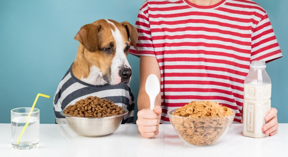 Hungry dog and human having breakfast together, both wearing striped T-shirts with bowls of food in front of them.