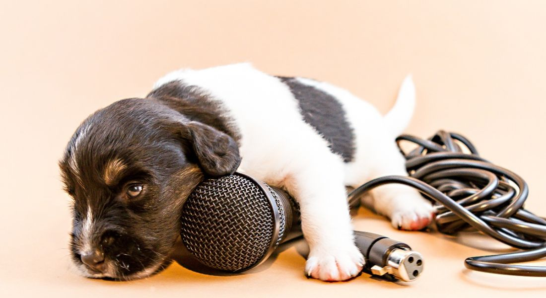 A puppy is resting on a microphone against a pale pink background.