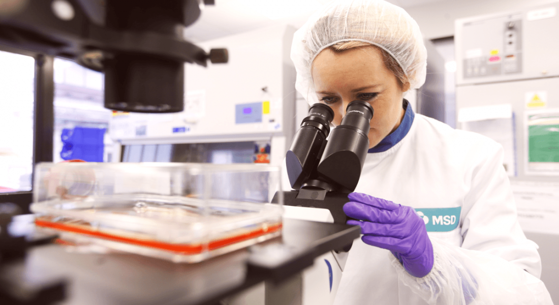 A female scientist wearing an MSD lab coat and protective gear looks into a microscope.