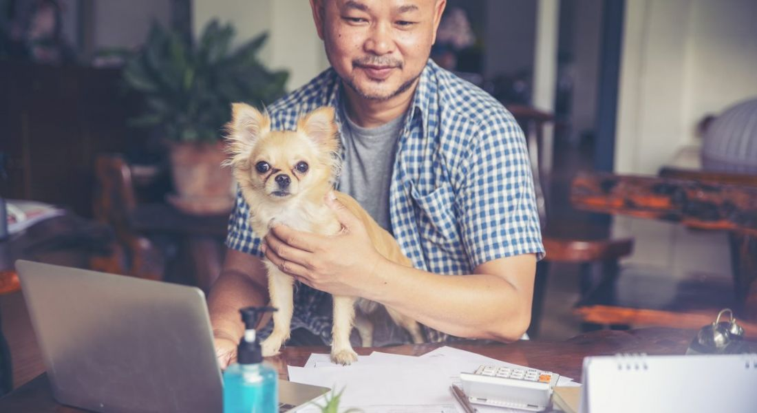 A man is working from home at a desk with his pet dog on his lap.