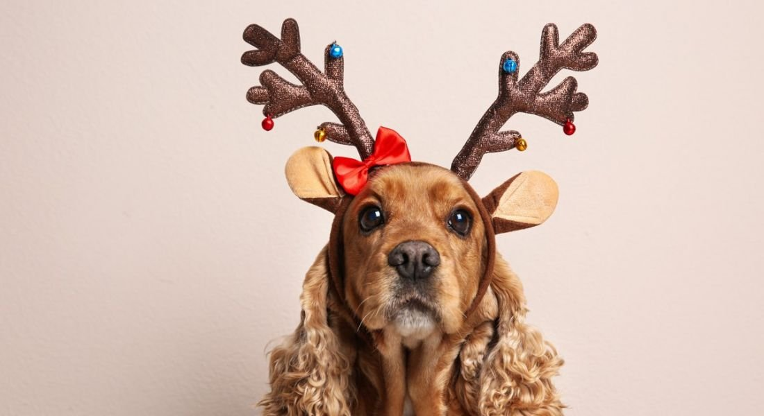 A brown dog is wearing reindeer antlers against a pale pink background.